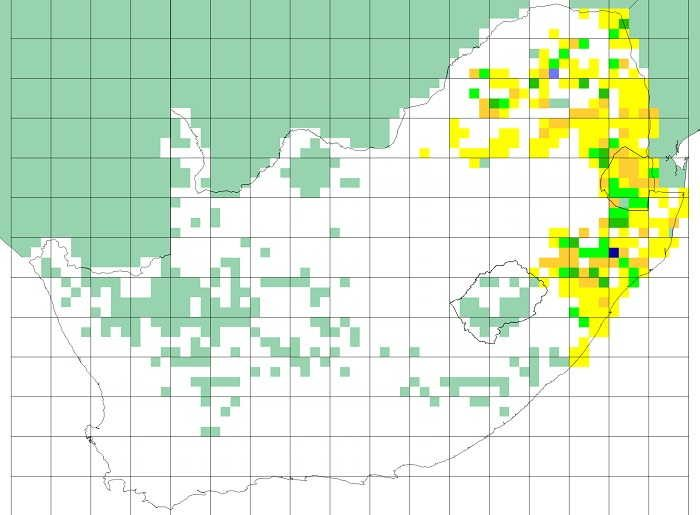 Figure 14. SABAP1 distribution map for the Shelley's francolin. Note that quarter degree grid cells shaded turquoise had no SABAP1 data or fewer than four cards submitted (Mozambique, Botswana, Namibia, much of the Northern Cape Province and former Transkei). The colours represent reporting rates, and the cutpoints for the different colours are the same as used for SABAP2, see Figure 15.