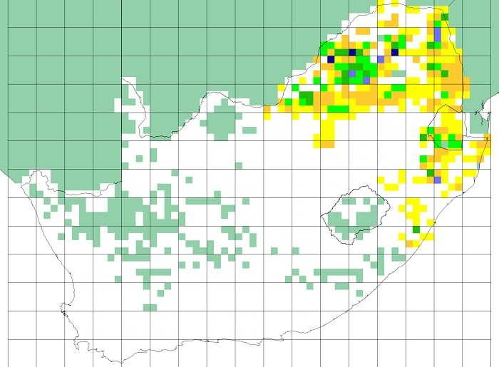Figure 2. SABAP1 distribution map for the Coqui francolin. Note that quarter degree grid cells shaded turquoise had no SABAP1 data or fewer than four cards submitted (Mozambique, Botswana, Namibia, much of the Northern Cape Province and former Transkei). The colours represent reporting rates, and the cutpoints for the different colours are the same as used for SABAP2, see Figure 3.