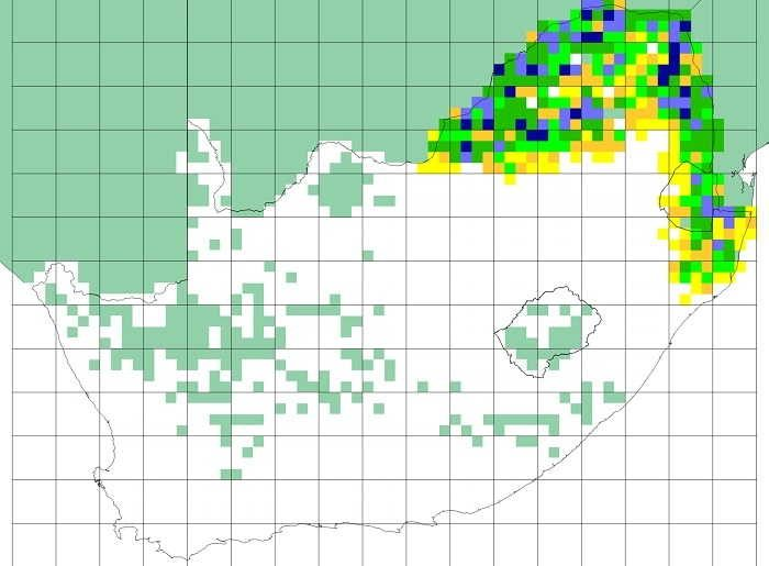 Figure 6. SABAP1 distribution map for the crested francolin. Note that quarter degree grid cells shaded turquoise had no SABAP1 data or fewer than four cards submitted (Mozambique, Botswana, Namibia, much of the Northern Cape Province and former Transkei). The colours represent reporting rates, and the cutpoints for the different colours are the same as used for SABAP2, see Figure 7.