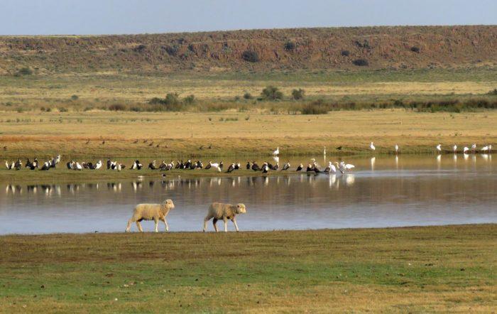 Farm dam teeming with birds, Seekoei River, Karoo Gariep Nature Reserve