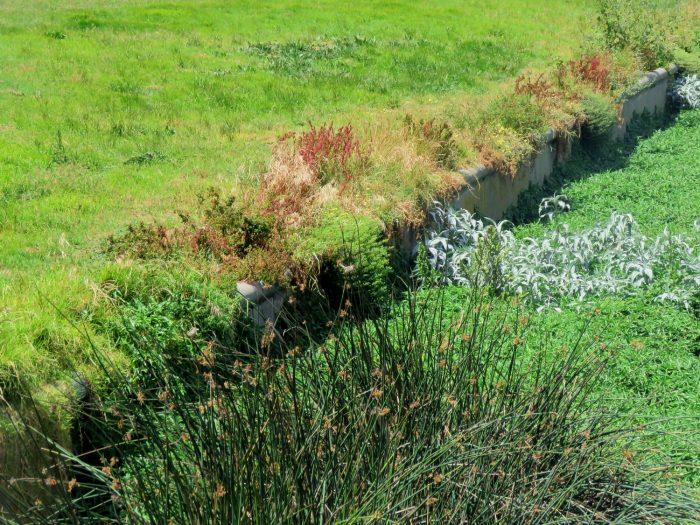 Novel ecosystem, Black River, Paarden Eiland