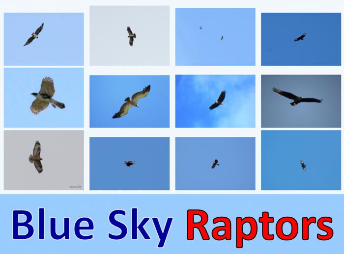 Blue Sky Raptors