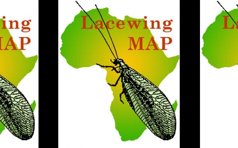 LacewingMAP