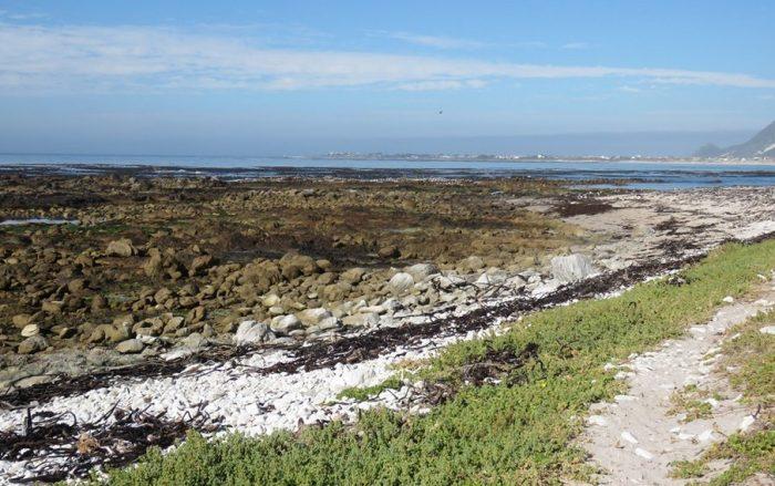 Habitat for African Black Oystercatcher rocky shore