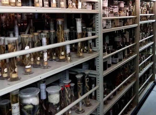 Natural history museum paris Michael Bates