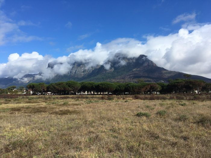 The Rondebosch Common, one of just a few dedicated areas of Cape Flats Sand Fynbos conservation.