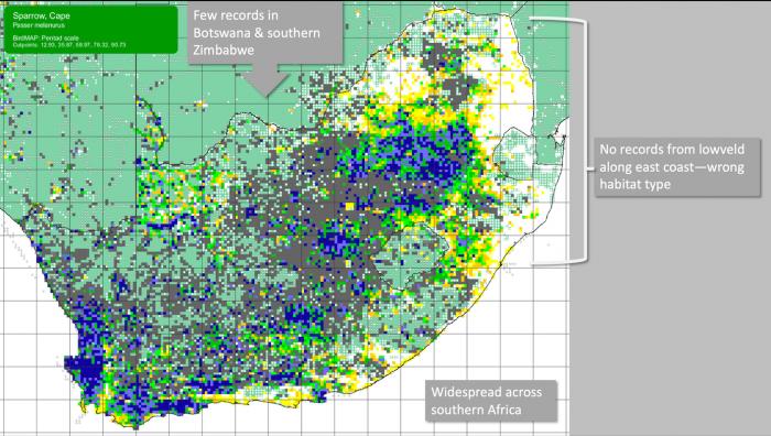 Cape Sparrow distribution map.